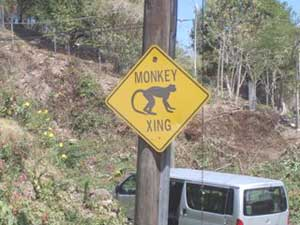 Road signs help protect the vervet monkeys.