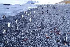 The black pebble beach