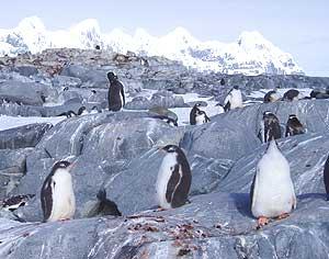 Way, Way Down Under: Antarctica 1