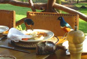 Birds eating breakfast
