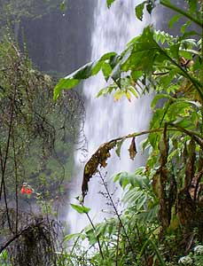 A waterfall in the rainforest