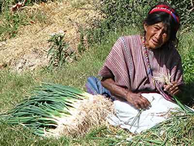 Onion sorter