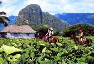 Riders on a tobacco farm in the Valley of Viñales