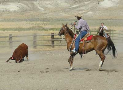 A roping demonstration