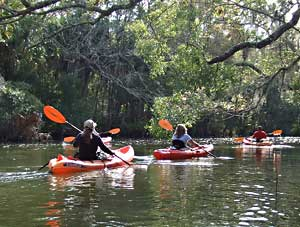 Kayakers navigate Little Huckleberry Creek, part of the ecosystem that keeps Apalachicola Bay clean.