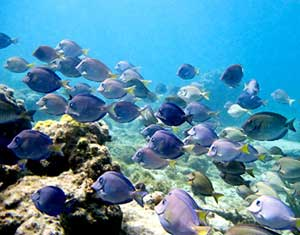 Snorkeling or diving in this region is an amazing experience. iStockphoto.com/pxlar8