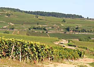The fabled vineyards of Champagne