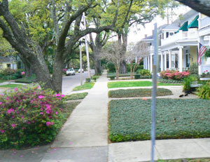 The trees are lined with Live Oaks in Mobile, Alabama.