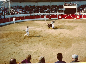 The Course Landaise: Bullfighting without the bull; they use a horned heiffer instead.