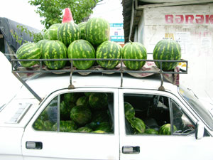 Taking watermelons to market
