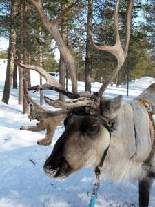 Not Rudolph