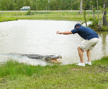 Gary Saurage and Big Al, a 13-foot alligator that weighs more than half a ton.