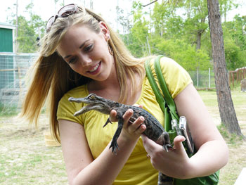 Don't try this at home! Sevie Ashley holds 'Little Al' who was found with an injured jaw and has to be specially fed at Gator Country in Beaumont, Texas. A normal gator this size could do some serious damage.