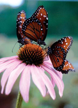 The Huntsville Botanical Garden has the nation's largest seasonal butterfly house.