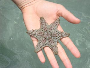 Starfish are plentiful....but don't take them with you!