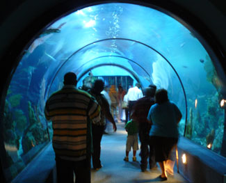 A walk-though aquarium at Moody Gardens