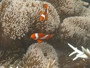 The author says the Raja Ampat Islands offer the best snorkeling in the  world. Photos