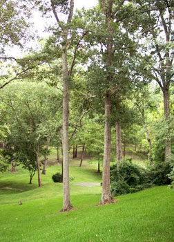 Lush green gardens, tree tops and lawns abound in St. Francisville.