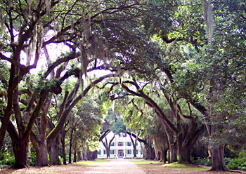 The grand front entrance of the Rosedown Plantation, which is part of the Louisiana State Park system. Photo by Kelly Westhoff.