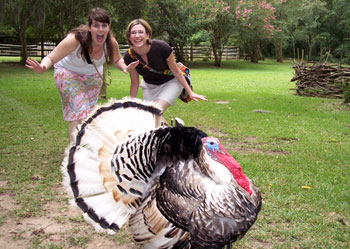 If you're lucky, Gus the Turkey will accompany you on a tour of the Oakley House and gardens in Audubon State Historic Site.