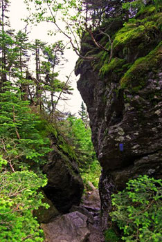 """The slimy wet rocks of the Cliff Trail. This trail is rated """"DDD"""" or """"Very Difficult"""" by the Mount Mansfield Visitor's Guide."""