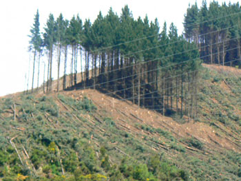 Clearcutting on a hillside