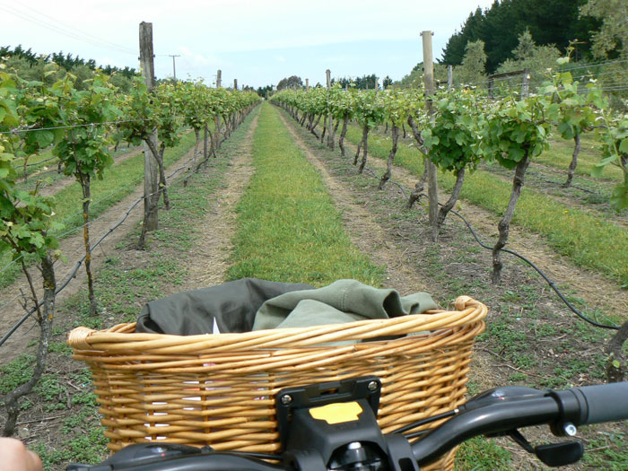 Biking through the vineyards of Greytown, New Zealand. Photo by Max Hartshorne.