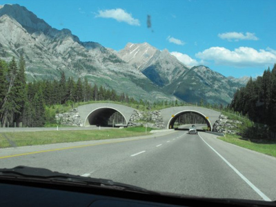 Wildlife overpass in Banff National Park