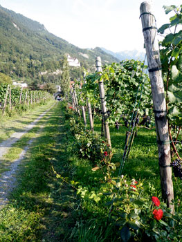 Strolling through the Hofkelleri vineyards