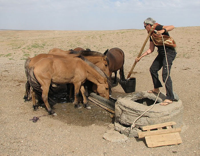 Rensina watering some thirsty horses in the Gobi Desert. In some wells there was a bucket made from the rubber from old tyres and wired onto a long pole.