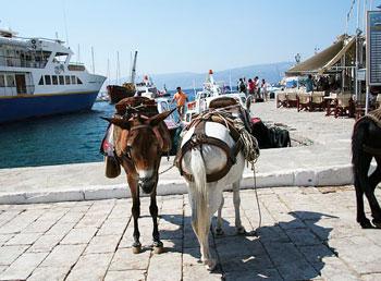 Donkeys in the harbor in Hydra