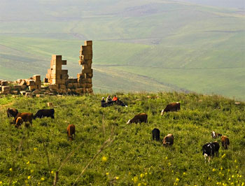 Cows graze near an ancient ruin in Algeria. Photo by Didier Wuthrich.