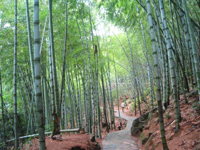 Bamboo Forest of Emerald Valley