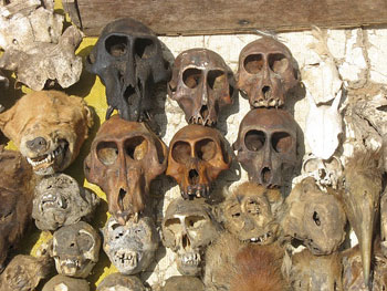 Skulls at Fetish Market