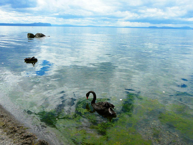 Lake Taupo on North Island is known as the trout-fishing capital of the world. Photo by David Rich.
