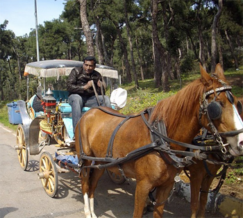 Horse carriage on the Princes Islands, near Istanbul, Turkey. photos by Inka Piegsa-Quischotte.