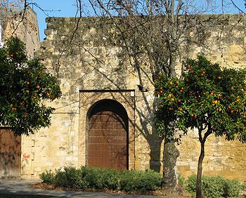 Orange trees line the streets of Cordoba. Photos by Angela Doherty.