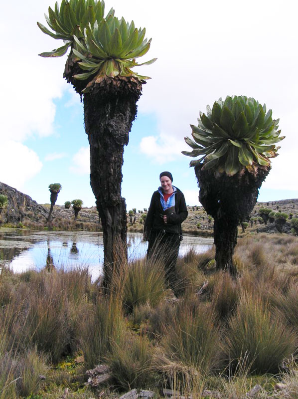 Giant Groundsels in the Mackinder Valley