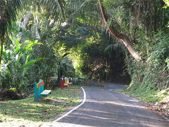 The asphalt road climbs up Cerro Ancon that's lined with jungle-like flora