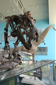 Dinosaur skeletons inside the Maryland Science Center.