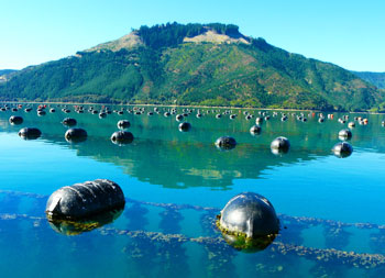 A mussel farm on South Island, New Zealand