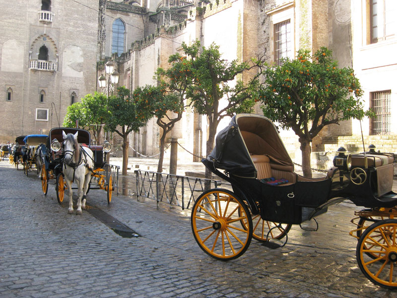 Horse and carriage in the Plaza Virgen de los Reyes