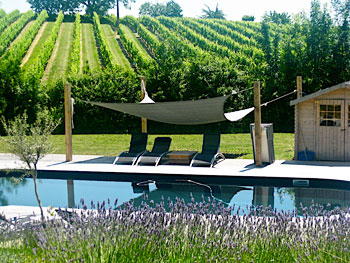 The natural saltwater pool at Simply Canvas, surrounded by vineyards and lavender fields