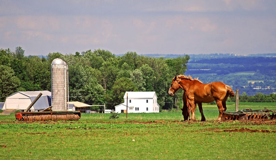New York State's picture perfect farmlands, the Finger Lakes