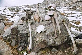 The mysterious bones. Photo - Merapahad.com