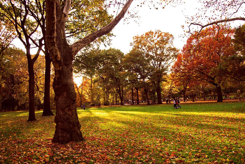 Central Park in New York City in Autumn