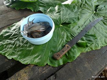 A fish feast in Samoa