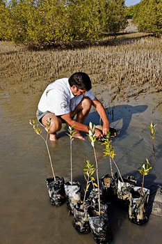 For each guest who visits the resort, a mangrove sapling is planted.
