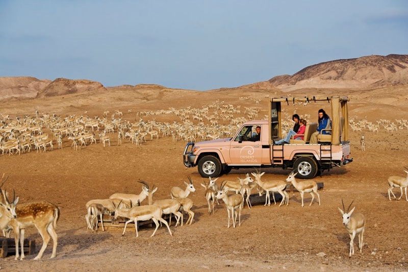 A desert safari on Sir Bani Yas Island in the United Arad Emirates