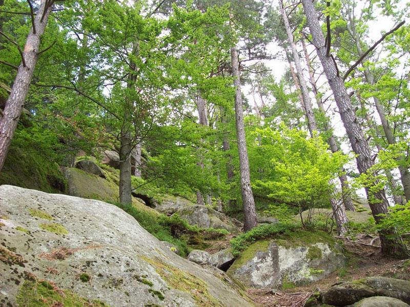The natural beauty of Pulcinske Skaly in Wallachia, Czech Republic.